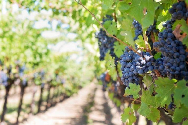 Kistjewijn.be: Franse wijnen